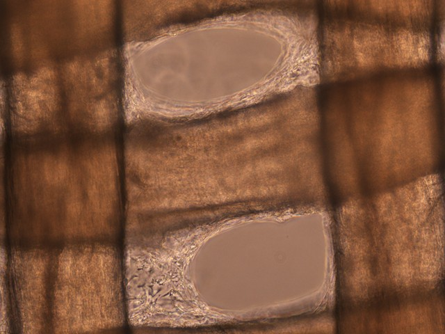 Biotextile I, microscopic detail