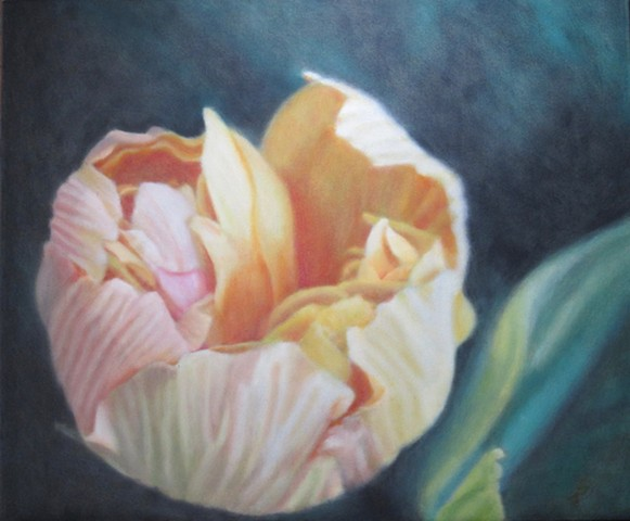 apricot colored peony bud