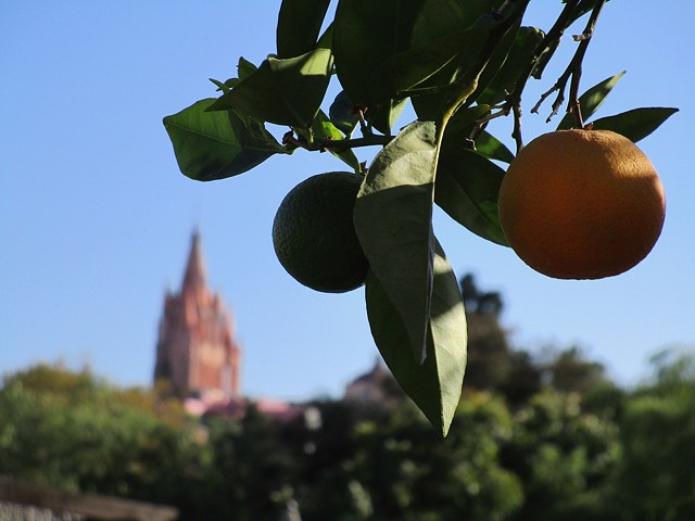Parroquia past one of the fruit trees on the terrace.