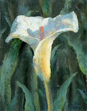 Skylar's Lily