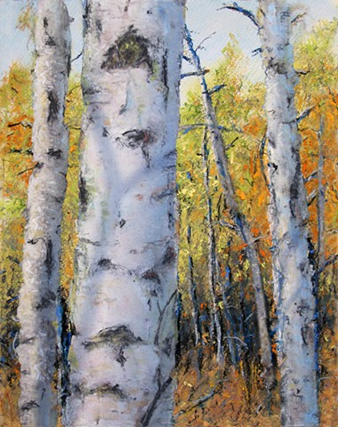 Fall Birch Shadows