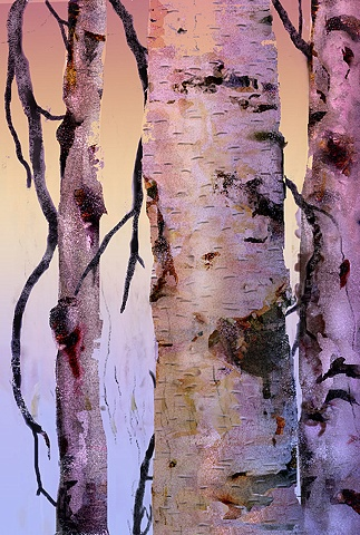 Winter Light Birch #2