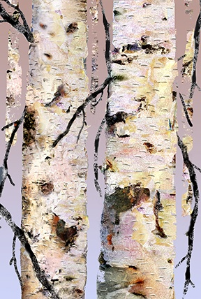 Twin Birch