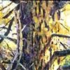 Tree Series #1
