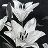 Lilies #1