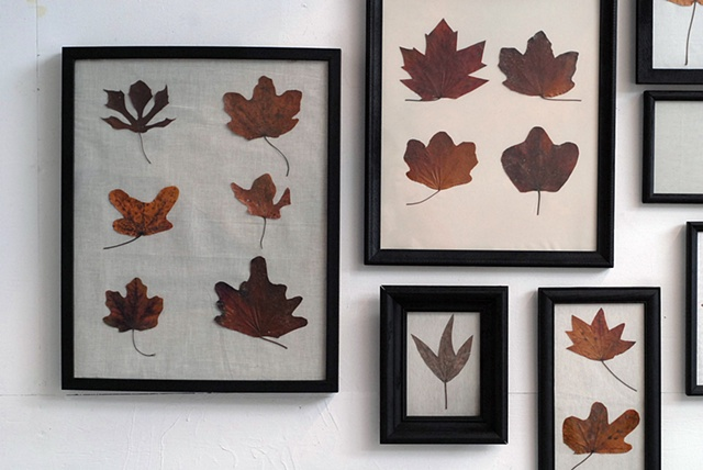 Carbonic Maple Leaves