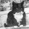 KT Cat