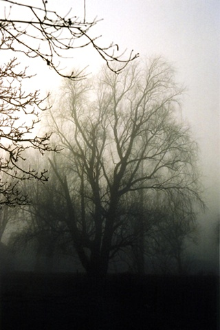 Trees in Mist #4