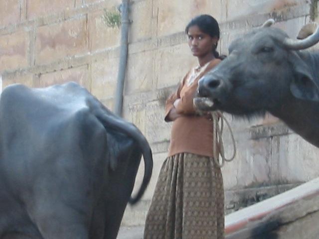 Girl and Ox