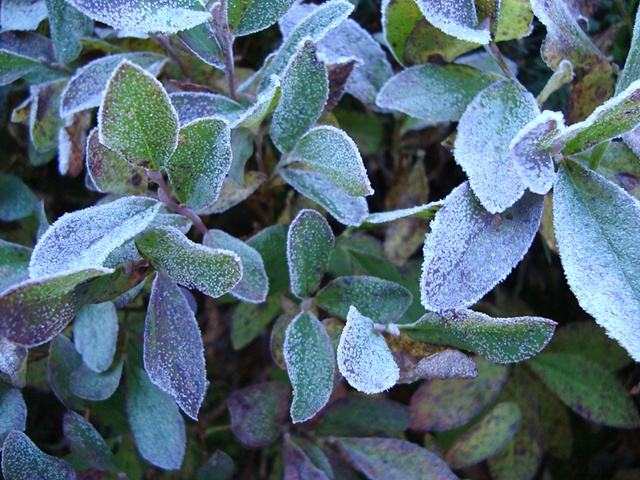 Frost #1