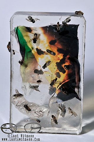 photo emulsion suspended in resin with real flies