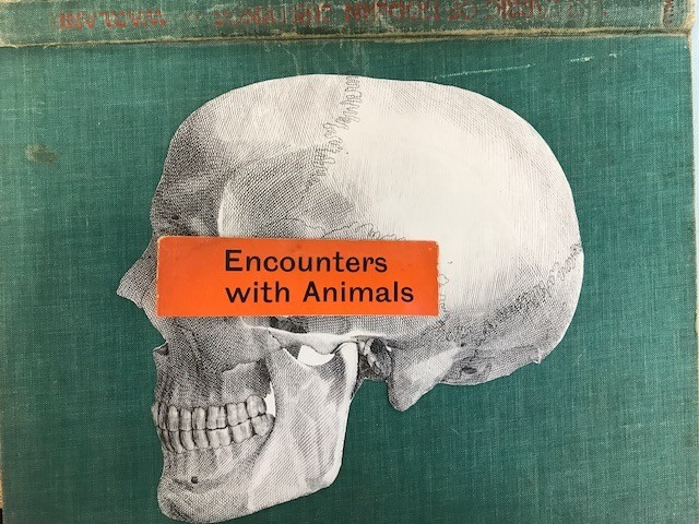 encounters with animals skull
