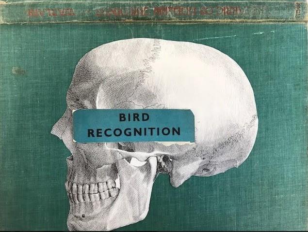 skull bird recognition