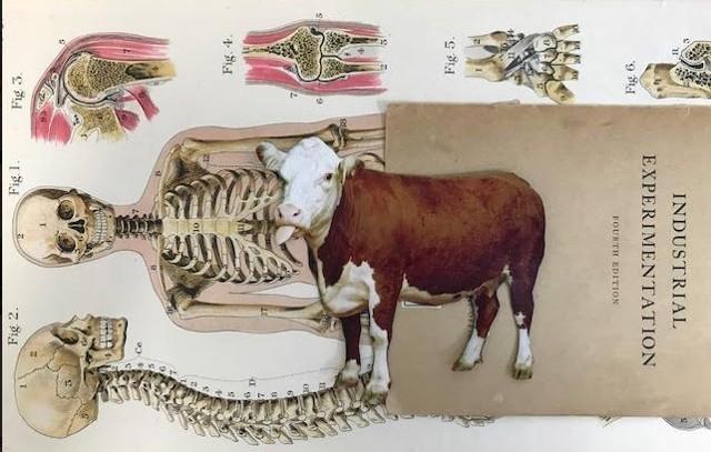 cow human skeleton