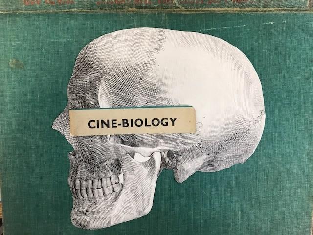 cine biology skull