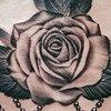 sternum rose