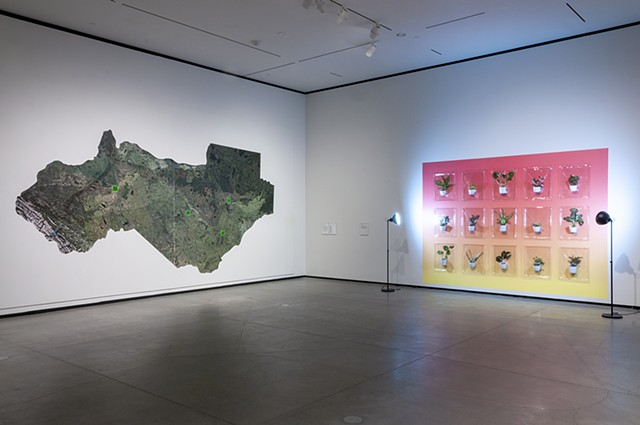 I Inhale/You Exhale, 2020. Vacuum formed potted plants , 304.8 h x 431.8 x 12.7 cm . Installation view of borderLINE : 2020 Biennial of Contemporary Art, Art Gallery of Alberta, Edmonton, 2020. Photo: Art Gallery of Alberta.