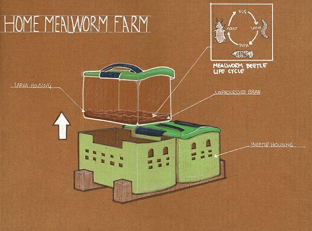 Mealworm Farm Drawing