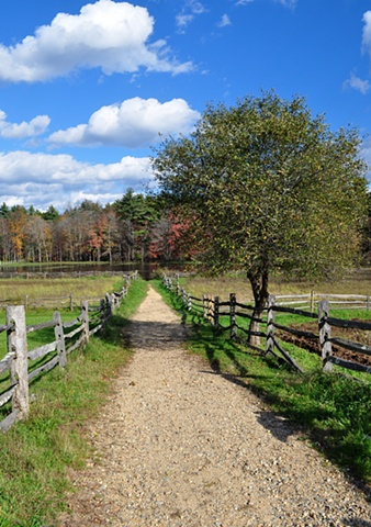 Gravel Road to Pond - Massachusetts