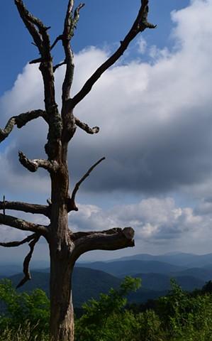 Lightning Tree Luray, VA