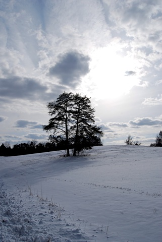 Trees On Hill After Snow - Manassas, VA