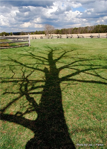 Tree Shadow - Bull Run Battlefield, VA