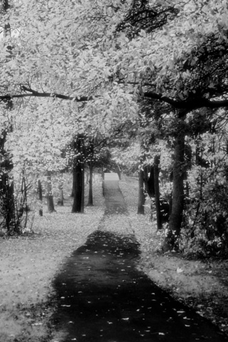 Infrared Filter - Fall Path - Fairfax, VA