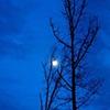 Rising Moon - Amelia, VA