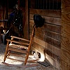 Barn Cat in Shaft of Sunlight - Farmville, VA