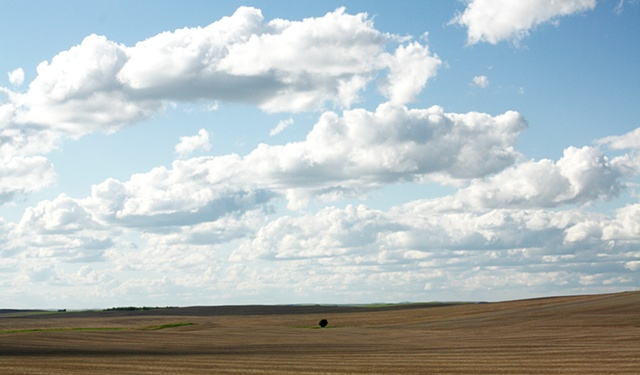 Lonely tree in a field. North Dakota.