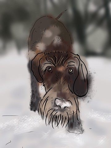 Bosley in the snow