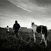 Appleby Horse  Fair. England.