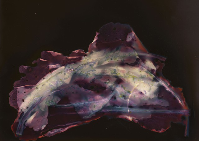 Earth Ruminations: Specimen V