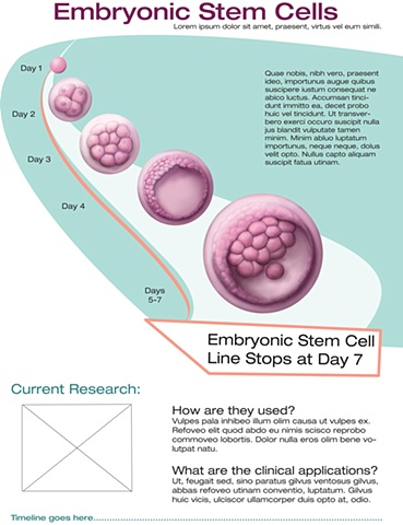 embryonic stem cells from day one to days 5 and 7. I created this for a stem cell research lab to help with education