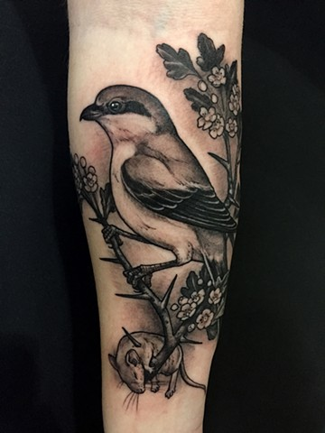 Shrike bird and dead mouse tattoo