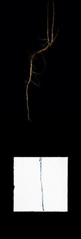 "Garlic Mustard, Alliaria petiolata from the series ""Exotic Invasive/ Plants"""