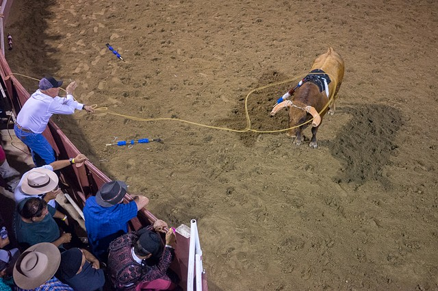 A Gustine audience member jumps in to assist in wrangling the bull