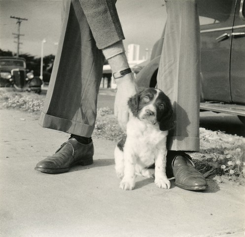 Untitled (puppy)