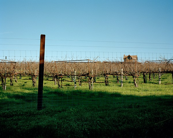 Vineyard, Forestville