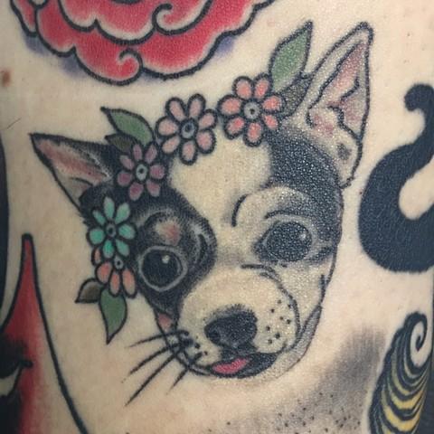 Healed Puppy Portrait