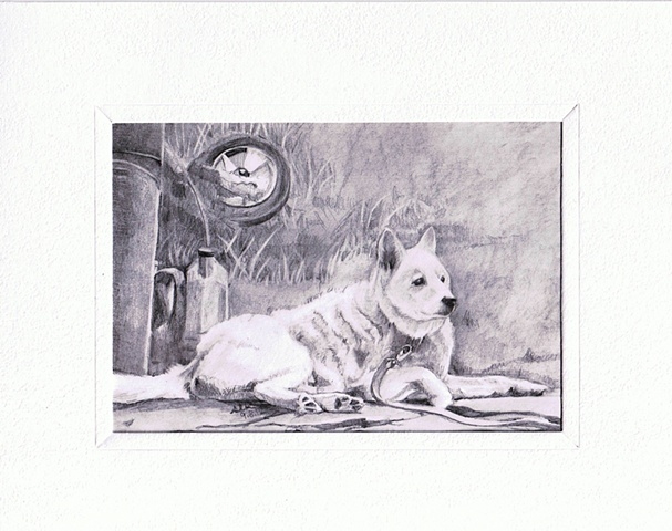 sheila kalkbrenner, white dog, pet portrait, gift for pet owner