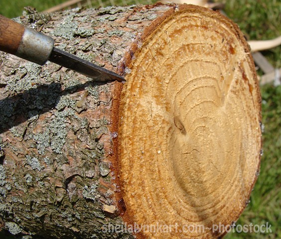 Pine Bark Photostock, Wood Carving Photostock, First Cut is the Deepest