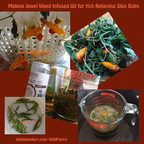 Jewelweed Oil in the Making