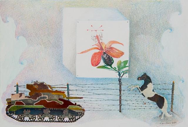 Kokio Ula hibiscus blooming amidst war