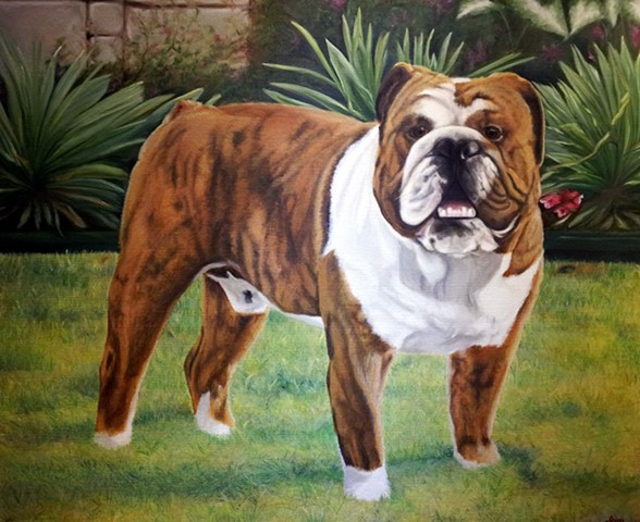 Zeeland English Bulldog