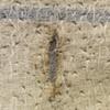 detail winter skin 1