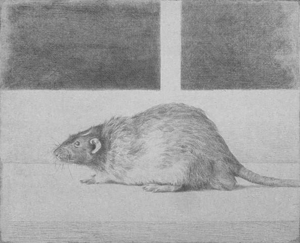 kyle stevenson silverpoint rat