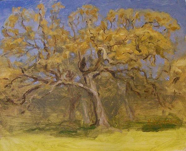 o.b. oak
