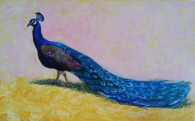 GFS Peacock