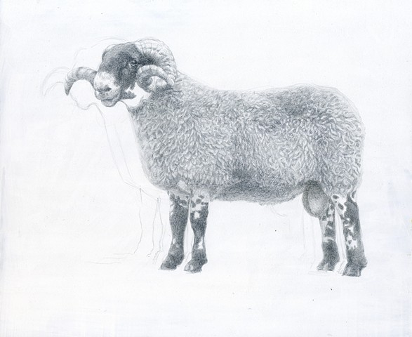 kyle stevenson silverpoint ram perfect